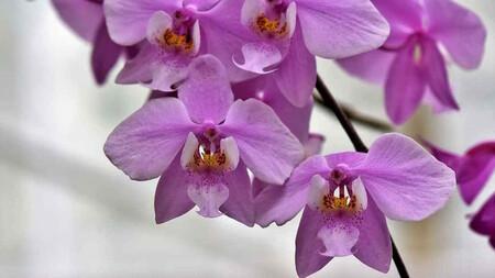 Orquideas Planta Interior Eliminar Humedad