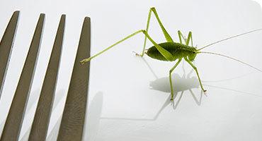 Cómete los insectos del Museo de Historia Natural de Londres