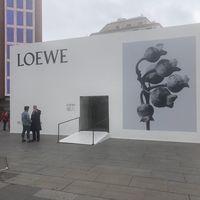 Loewe Art Box: la exposición de fotografía efímera de Loewe con talleres gratuitos de perfumería y arte floral en la Plaza de Callao