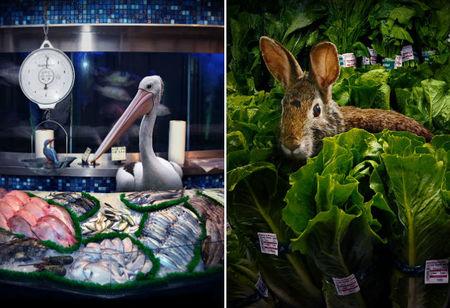Garden Fresh, animales salvajes en el supermercado