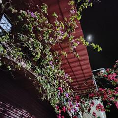 Foto 6 de 43 de la galería realme-6-pro-galeria-fotografica en Xataka