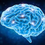 Ahora se pueden manipular células cerebrales de animales de laboratorio usando un smartphone