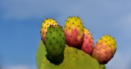 Cactus 3622543 1920