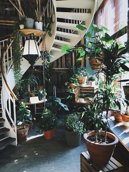 Trucos Para Regar Las Plantas 1