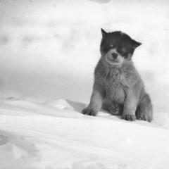 Foto 12 de 18 de la galería las-primeras-fotografias-de-la-antartida en Xataka Foto