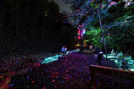 Lumina Foresta, un sendero mágico en un bosque encantado