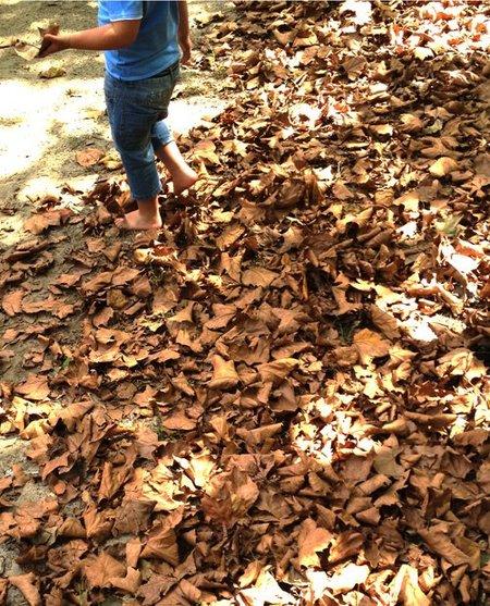 niño pisando hojas secas