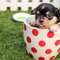 Cuatro estrena sus 'Amores perros' el martes día 15
