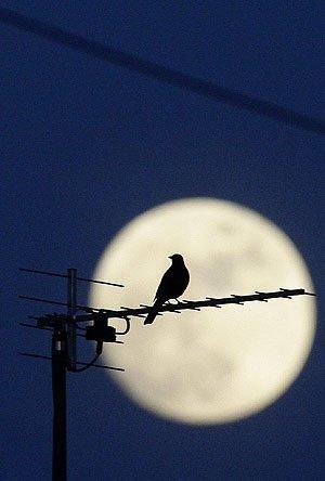 Parece que será una noche tranquila: ¿la luna llena afecta al número de gente que acude al hospital?