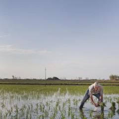 Foto 13 de 14 de la galería la-produccion-de-los-cereales-con-base-de-arroz en Vitónica