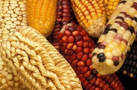Los cereales en la alimentación infantil: el maíz