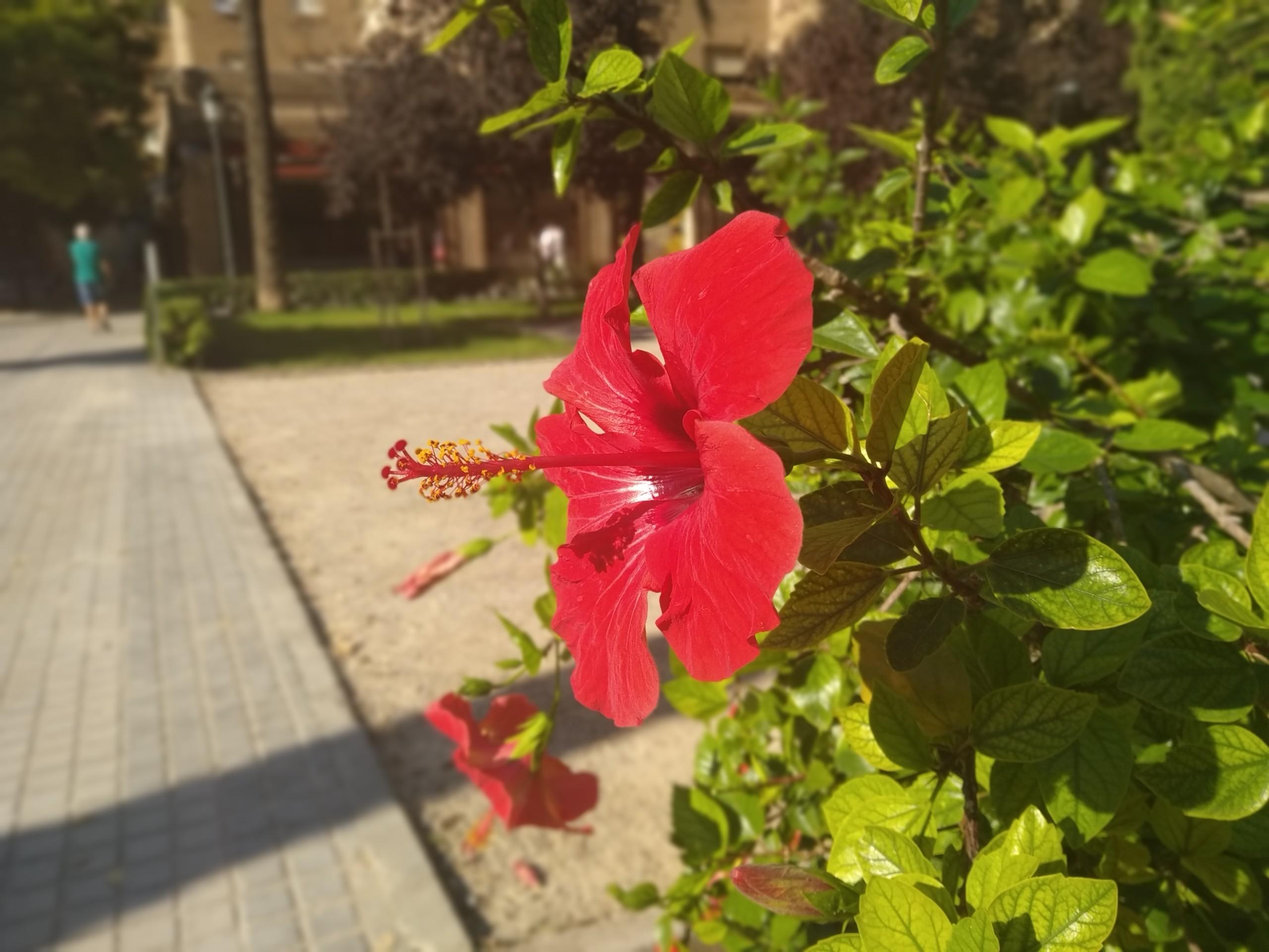 Foto de Fotos tomadas con el Xiaomi Mi A2 Lite (40/47)