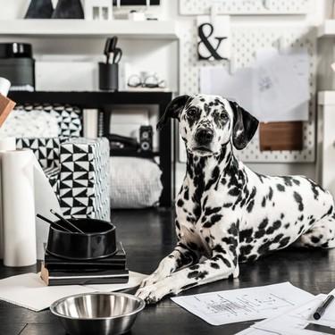 En octubre Ikea nos invita a consentir a nuestras mascotas con su nueva línea de productos Lurvig especialmente pensada para ellas