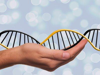 Nutrigenómica: la clave para individualizar nuestra dieta