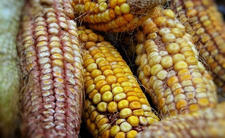Maize 4144498 1920