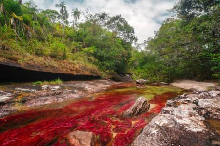 Cano Cristales Rio En La Macarena Meta