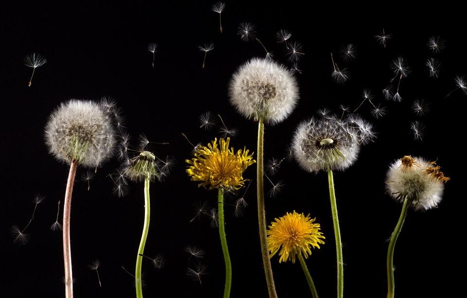 Según el mes de tu nacimiento, tendrás inclinación por sufrir estas alergias