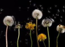 Lo que la ciencia nos dice sobre por qué tenemos alergias