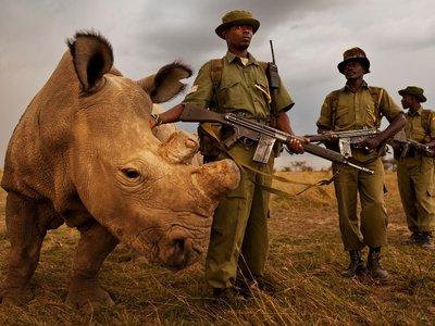 El último rinoceronte blanco del mundo está buscando pareja y ya tiene su propia cuenta en Tinder