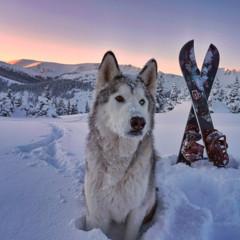 Foto 8 de 9 de la galería loki-the-wolfdog en Diario del Viajero