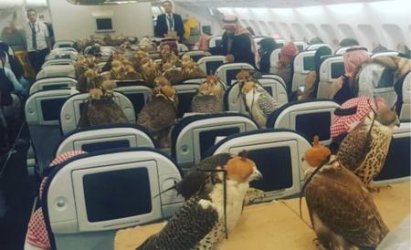 Lo que siempre quisiste saber de los halcones del príncipe saudí y no sabías a quién preguntarle