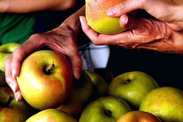 escogiendo manzanas