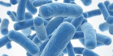 Addietistas Elegir Probiotico 500x250