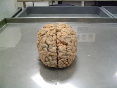 Siete conceptos sobre la mente que deberías borrar de la tuya, según los propios expertos