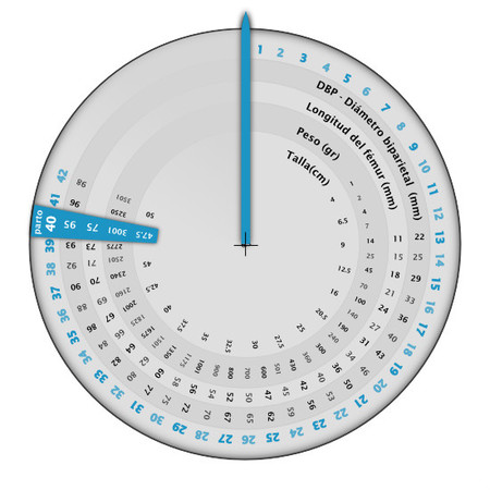 Calendario de peso y tamaño del feto en el embarazo