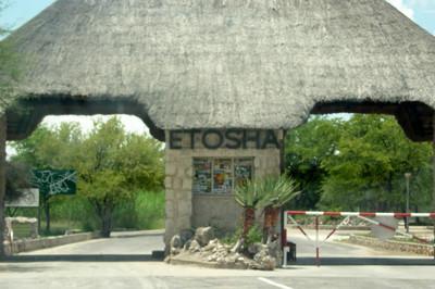 Viaje a Namibia (II) Recorriendo Etosha National Park, De Okakuejo a Namutoni