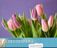 ¿Qué flor va a reinar en tu casa esta primavera? La pregunta de la semana