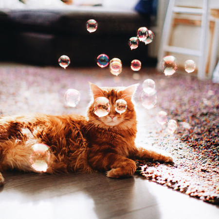 Ginger Cat Photography Kotleta Cutlet Kristina Makeeva Hobopeeba 38