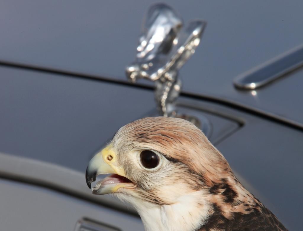 Foto de Rolls-Royce Phantom Coupé Shasheen (2/9)