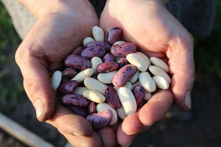 Runner Beans 1835646 1280