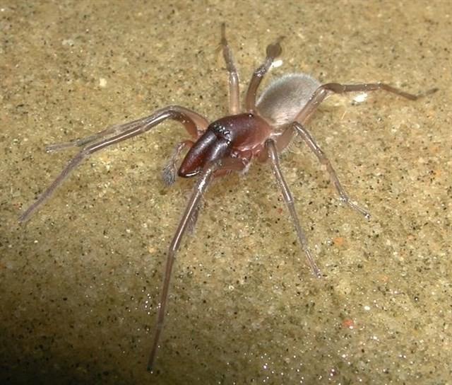 El nombre de esta nueva araña se inspira en una canción de Bob Marley