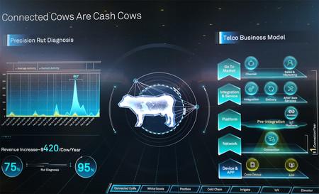 Vacas Conectadas