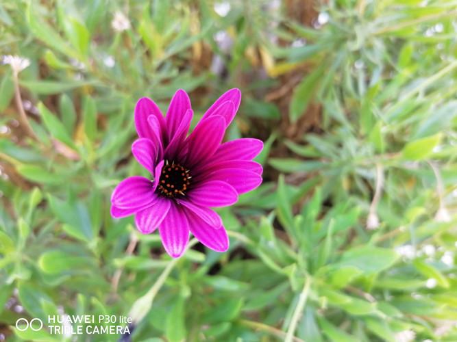 Fotos tomadas con el Huawei P30 Lite