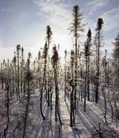 Deforestación contra el calentamiento global