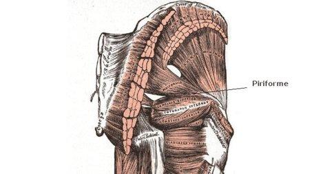 Músculos poco visibles pero que no debemos olvidar: el piriforme