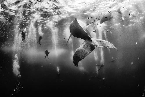 El concurso de fotografía de National Geographic nos deja imágenes asombrosas