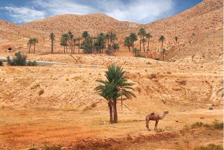 Viaje a Túnez con Claudia Cardinale
