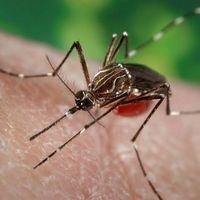 Casos probables de Dengue se duplican en México en 2020: van más de 6,000 en enero