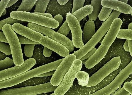 Así es la efímera (y volátil) vida de una bacteria: en 3 días acumula tantas generaciones como toda la historia humana
