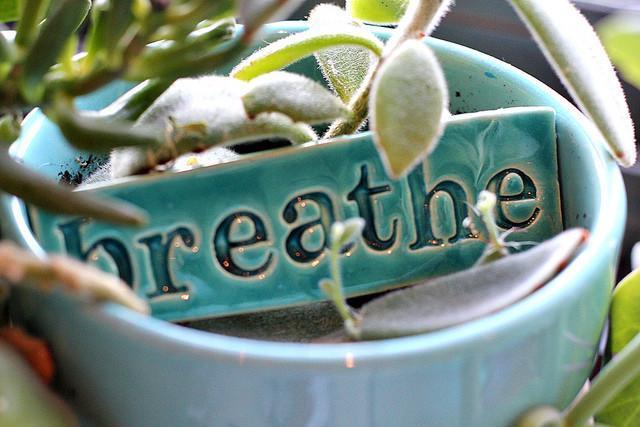 4 tipos de respiracion: