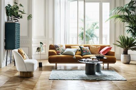 Cuatro plantas de interior para tu casa que no necesitan luz directa y algunas son casi indestructibles