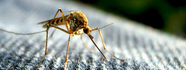 Los mosquitos son capaces de recordarte por el olor si les atacaste