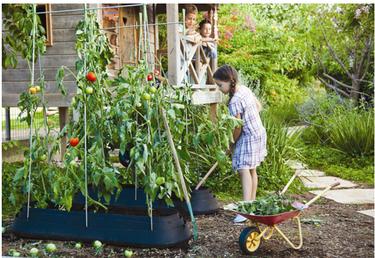 Planta un huerto urbano en tu balcón