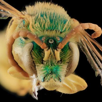 Fotografía de abejas