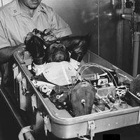 Se cumplen 56 años de la primera órbita terrestre de un chimpancé