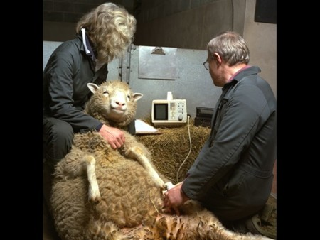 Dolly Being Scanned